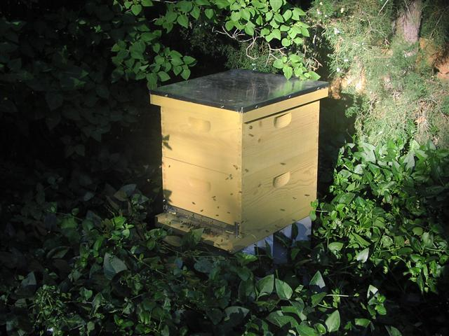 A beehive enhances your garden and landscape
